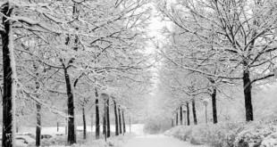چرا زمان بارش برف همه جا آرام است؟